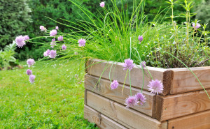 planter of aromatic plants with chives flower in wooden pot